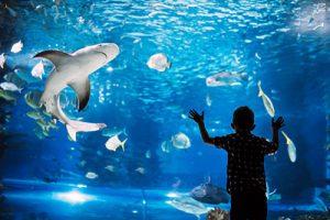 Serious Boy Looking In Aquarium With Tropical Fish At Ocenarium